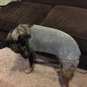 Jason's Dog